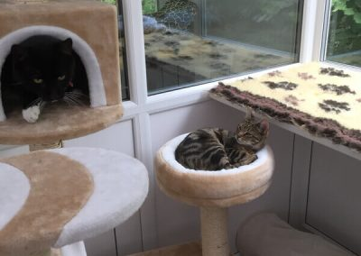 cattery-Lincoln (1)
